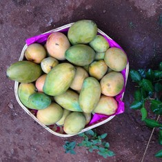 Mangoes: The fruit that holds my fragile relation with my father together