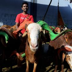 The Daily Fix: To regulate Bakrid sacrifices, India should first expand abattoir network