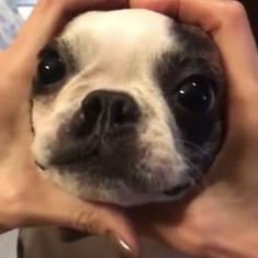 Watch: Dogs across the world are trying the #SnootChallenge with their humans (and many are winning)