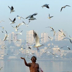 Proposed site for Navi Mumbai airport is home to 266 bird species, states survey: TOI