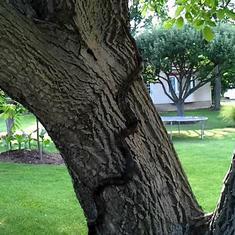 क्या सच में चंदन के पेड़ से सांप लिपटे रहते हैं?