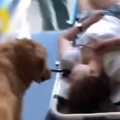 Watch: Golden retriever refuses to leave its owner when she's unconscious, rides in her ambulance
