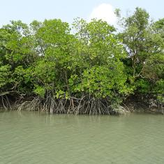 How restoring mangroves has helped empower women in Sri Lanka, Vietnam and the Philippines