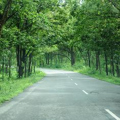 Centre writes to Karnataka on lifting night traffic ban on NH 766 passing through Bandipur reserve
