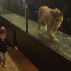 A video of a lion behind a glass wall in an Istanbul cafe is drawing anger on the internet. Rightly