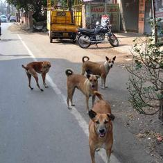 Chandigarh: Stray dogs kill a toddler playing in a park in Sector 18