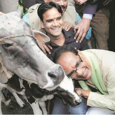 It's cow politics all the way as BJP, Congress engage in one-upmanship in poll-bound Madhya Pradesh