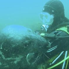 What to do when friendly, playful seal cuddles up to a diver and strokes his head: Shoot a video