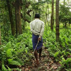 A 'people's forest' in Assam holds new hope for rhino conservation