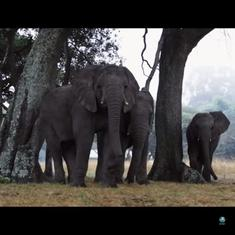 This touching video shows rescued elephants being released back into the wild where they belong