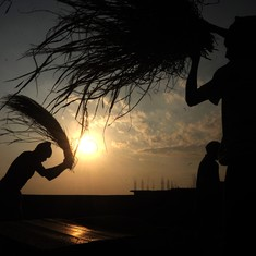 Rising temperatures could cut 3.6% of India's daylight work hours by 2025