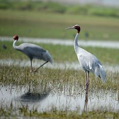 Climate change, disturbance to habitat are affecting the breeding patterns of Indian birds