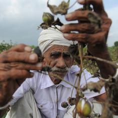 बीते साल हानिकारक कपास के 900 करोड़ रु के बीज बेचे जाने सहित आज की प्रमुख सुर्खियां