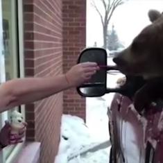 Watch: A Canadian zoo took a bear on an outing for ice cream. Now, they're facing charges