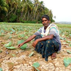 As Kerala waits for drought relief funds from the Centre, farmers face a livelihood crisis