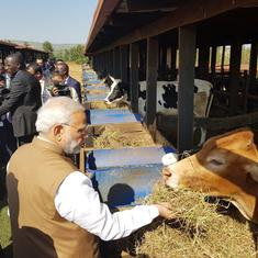 Cows are an important part of India's tradition and culture, says Narendra Modi