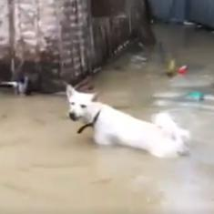 Watch: This pet dog playing in the floodwater in Kerala is a spot of joy amidst the ordeal