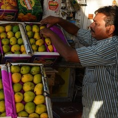 Spotty harvest: India's mangoes are being hurt by climate blight