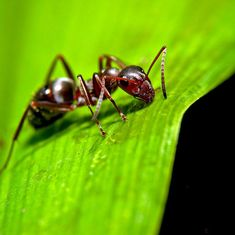 The Weekend Fix: How ants kidnap and enslave their neighbours' kids, plus nine great reads