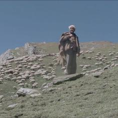 A Himachali shepherd hunts for treasure on a mystic mountain in a film about a pastoral community