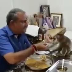 Watch: A JD(S) MLA in Karnataka shared his meal with a monkey before casting his vote