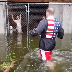 Watch: This is how abandoned pets and stray animals were rescued from Hurricane Florence floods