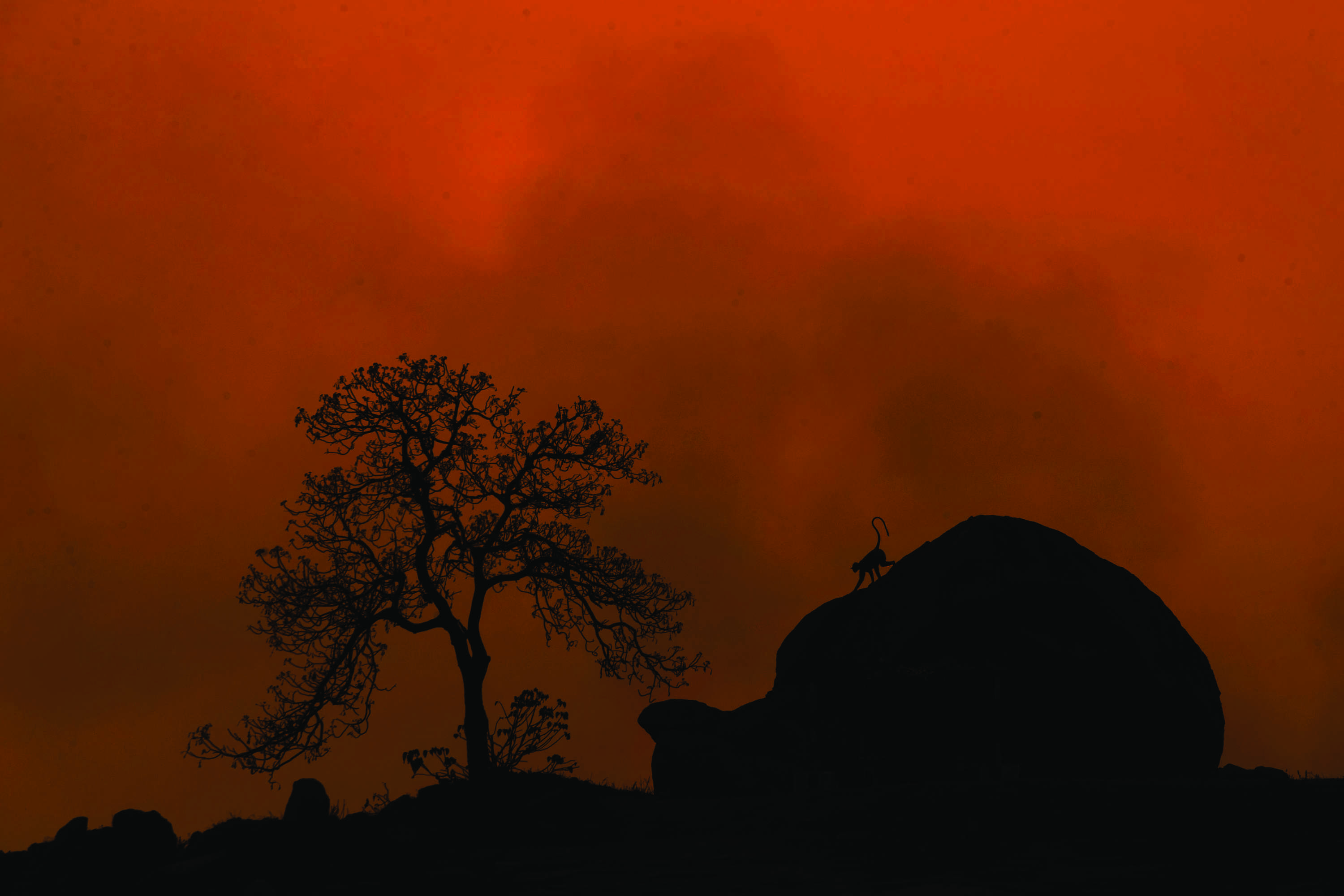 """'Twilight Zone' by Arun Kumar NK frames a langur against the setting sun in Hospet, Karnataka. """"Not far from the rich World Heritage Site of Hampi, a quiet afternoon gave way to a spectacular evening,"""" said the note. """"The filigreed reach of the tree, the mammoth boulder, the casual loop of the langur's tail... this gentle image exudes ease and quietude."""""""