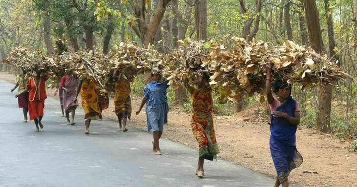 Forest dwellers carry piles of produce. Credit: Reuters