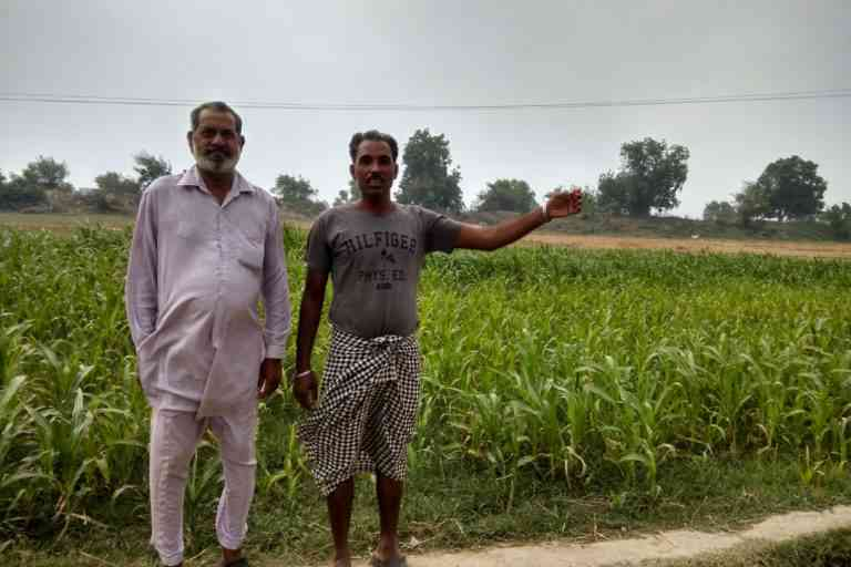 Ferozepur's farmers say flooding in the Sutlej river, which flows less than 500 metres away, is a major threat to their crops. Photo credit: Mayank Aggarwal
