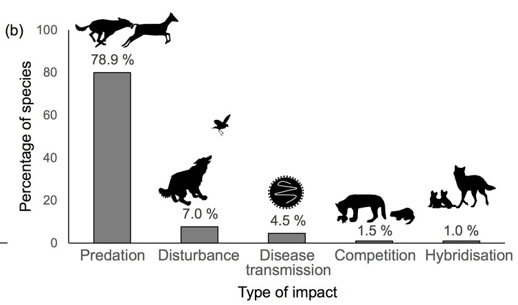 The frequency of different types of dog impact on threatened species.
