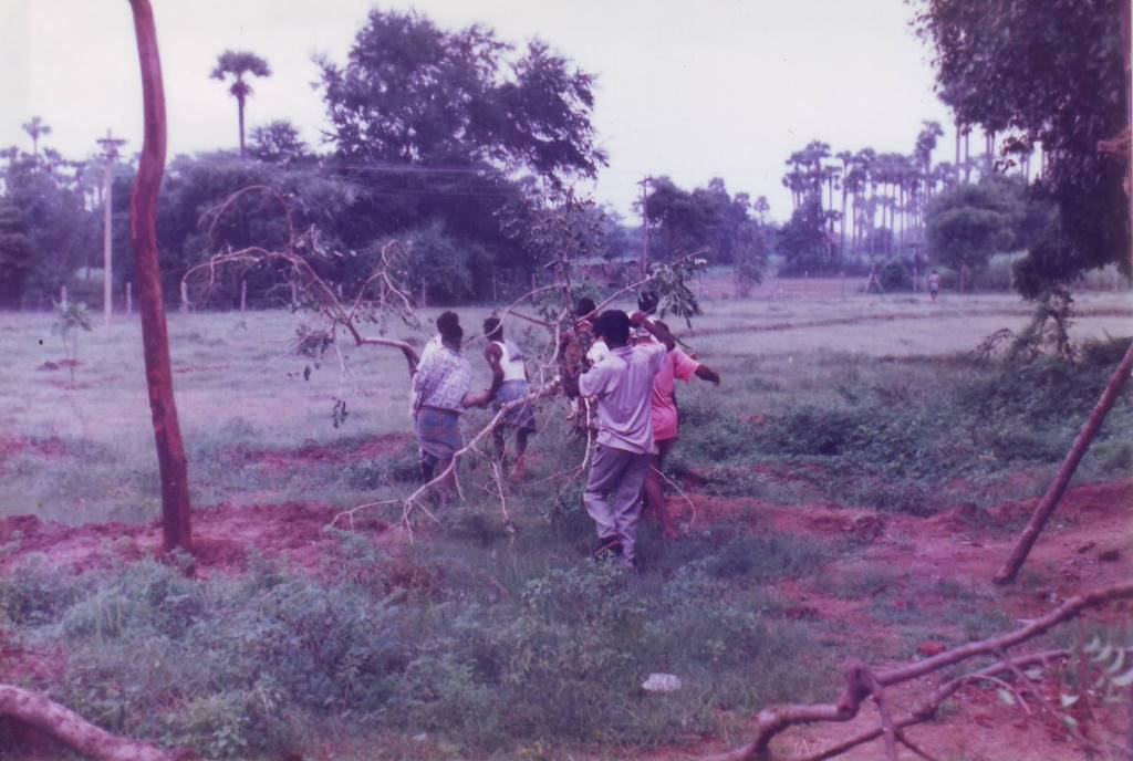 We transplanted full-grown (surplus) trees from the Croc Bank.