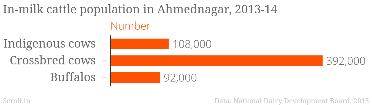 In-milk cattle population in Ahmednagar, 2013-14