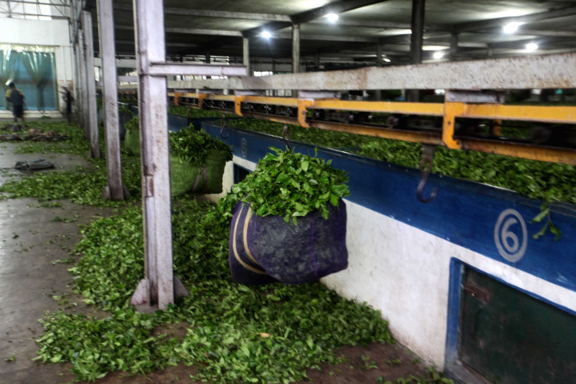 A view inside a bought-leaf factory.