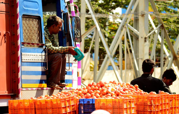 Crates of tomatoes waiting to be transported to urban markets in Kolar, Karnataka. The price of tomatoes crashed to 25 paise/kg, prompting farmers in Chhattisgarh, Nashik and Hyderabad to dump their produce. Image Credits: Prabhu Mallikarjunan