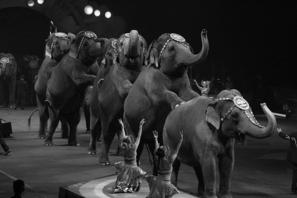 Scene from an Indian circus before wild animals were banned. Credits: Flickr CC BY