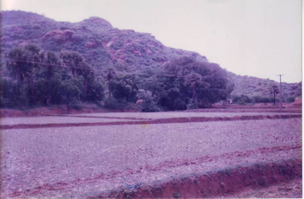 What the farm looked like 20 years ago.