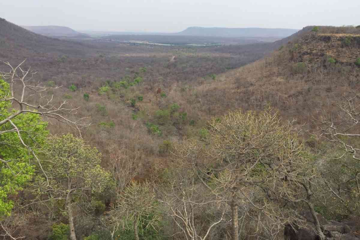 Typical semi-arid to mesic woodland savanna in summer, at Panna National Park. Photo credit: Abi Vanak.