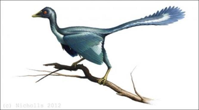 Archaeopteryx restored Robert Nicholls. Source: Sedgwick Museum, University of Cambridge