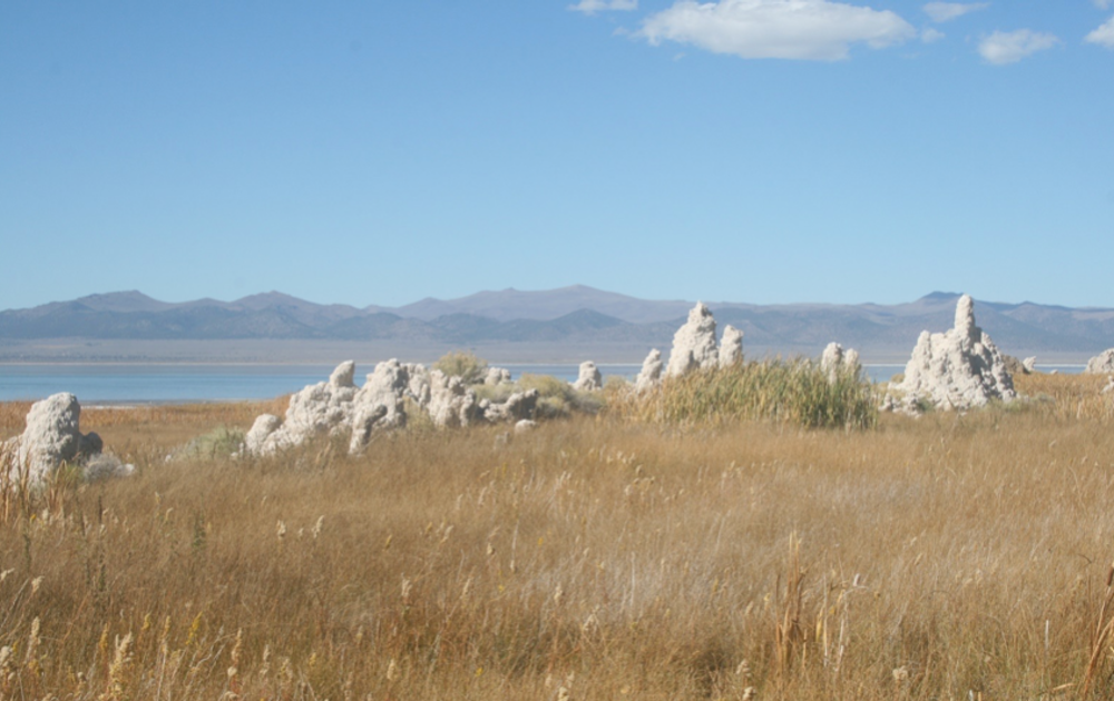 Tufa towers on the shoreline. Photo credit: Alexander Brasier