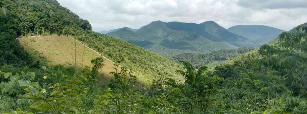 Typical podu cultivation in the landscape, forests near the villages have been cleared for hill slope cultivation. Podu cultivation is one of the drivers of forest loss in Papikonda National Park and its forested buffers. Photo Credit: Vikram Aditya