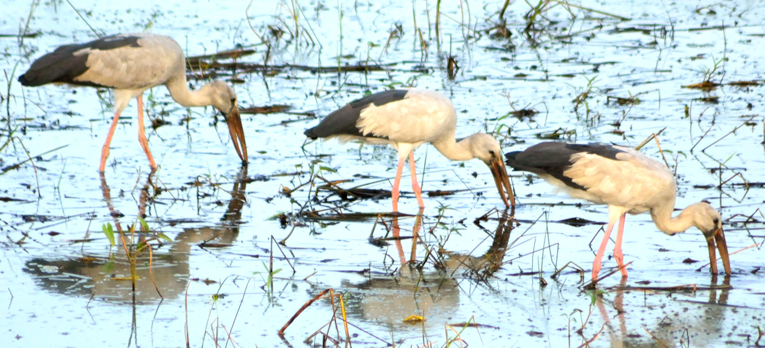 The study found that hunters preferred large and medium-sized waterbirds.