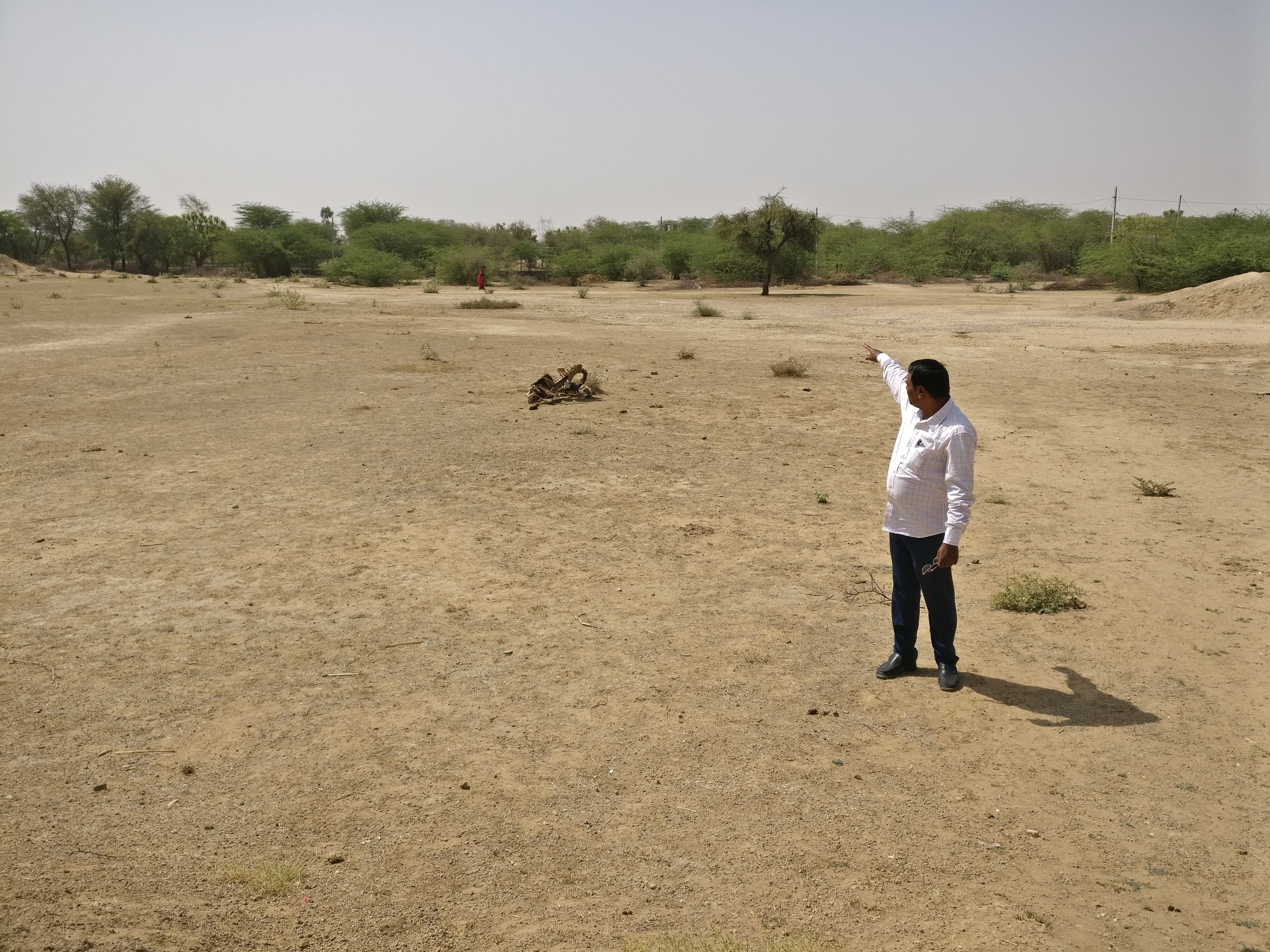 Shambhu Dayal Bairwa, a teacher at the Adarsh senior school in Pipla, points to land that belongs to the school but is now used as a dumping ground for cattle carcasses.