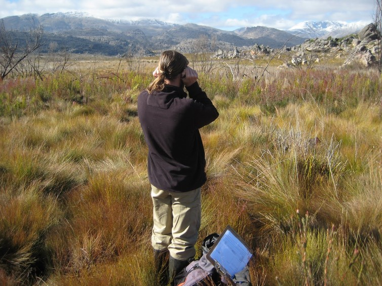Listening for calls of the endangered Arthroleptella subvoce to monitor its abundance in the Groot Winterhoek Wilderness Area, South Africa. John Measey