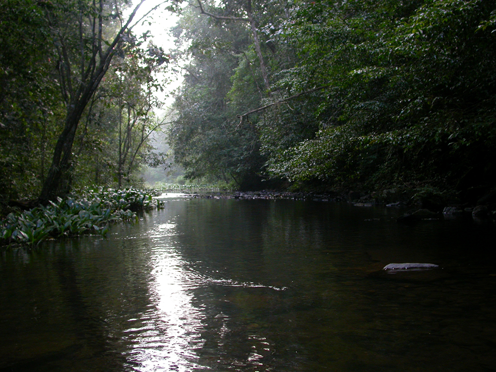 Upstream from Gurukula Botanical Sanctuary. Photo credit: Gurukula Botanical Sanctuary Archives