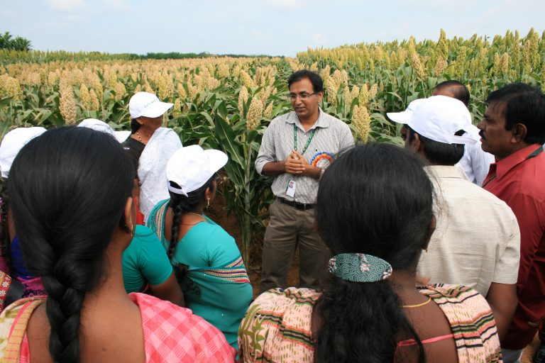 Sorghum breeder Ashok Kumar and farmers with Parbhani Shakti in the background. Photo Credit: ICRISAT